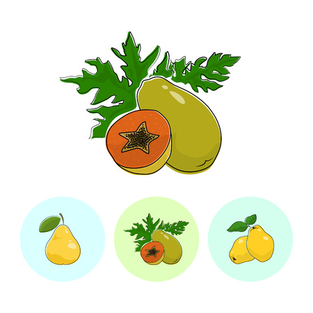 fruitage: Fruit Papaya  on White Background , Set of Three Round Colorful Icons Pear , Papaya and Quince , Vector Illustration Illustration