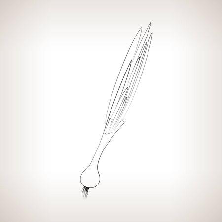 チャイブ: タマネギ、光の背景、黒と白のベクトル図の輪郭のチャイブをイメージ