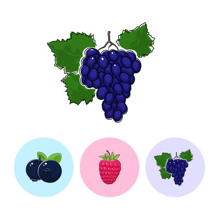 fruitage: Fruit Grapes   on White Background , Set of Three Round Colorful Icons  Blueberries, Raspberries and Grapes, Vector Illustration