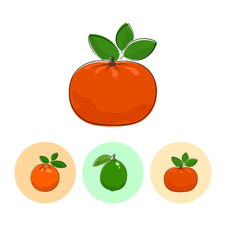 fruitage: Citrus Mandarin  on White Background , Set of Three Round Colorful Icons Orange, Lime and Mandarin , Vector Illustration
