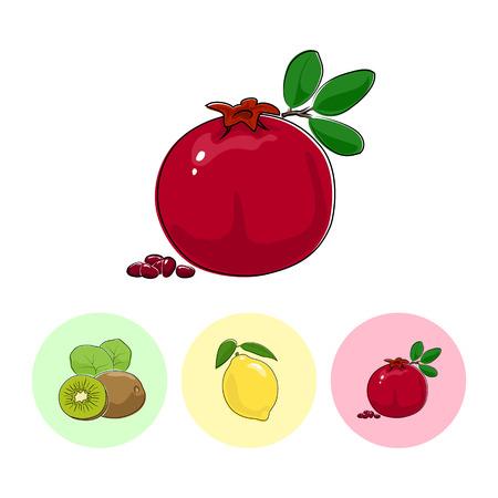 fruitage: Fruit  Pomegranate   on White Background , Set of Three Round Colorful Icons Kiwifruit, Lemon and Pomegranate , Vector Illustration