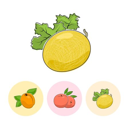 fruitage: Fruit Melon  on White Background , Set of Three Round Colorful Icons Apricot, Peach and Melon , Vector Illustration