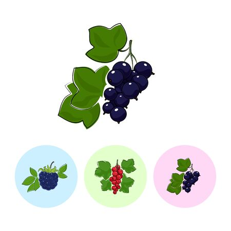 fruitage: Berry Blackcurrant  on White Background , Set of Three Round Colorful Icons Blackberry, Redcurrant and Blackcurrant , Vector Illustration