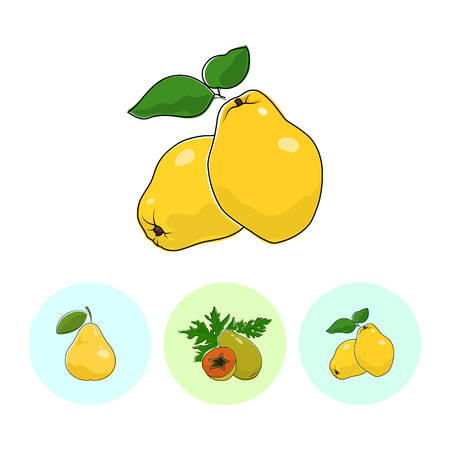 fruitage: Fruit  Quince  on White Background , Set of Three Round Colorful Icons Pear , Papaya and Quince , Vector Illustration