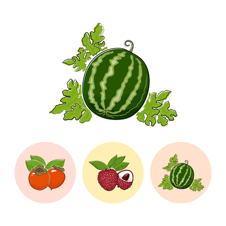 fruitage: Fruit  Watermelon  on White Background , Set of Three Round Colorful Icons Persimmon , Lichee and  Watermelon , Vector Illustration