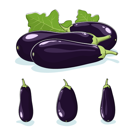 edible: Eggplant,  Three Different Kinds of Aubergine, Vegetable Eggplant  Isolated on White Background,Edible Fruit, Vector Illustration