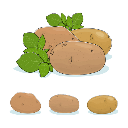 potato plant: Potato, Three Different Kinds of Potatoes, Vegetable Praties  Isolated on White Background, Edible Fruit,  Vector Illustration Illustration