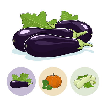 courgette: Eggplant Vegetable Isolated on a White Background , Set of Three Round Colorful Icons  Eggplant, Pumpkin, Zucchini, Icons Edible Fruits,  Vector Illustration Illustration
