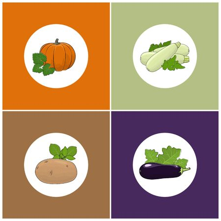courgette: Set of Four Icons of Vegetables, Icon of a Ripe Orange Pumpkin, Icon Vegetable Zucchini , Icon Purple Eggplant  with Leaf, Icon Vegetable Potatoes with Leafs , Vector Illustration