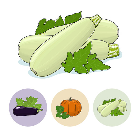 edible: Zucchini Vegetable with Leafs Isolated on a White Background , Set of Three Round Colorful Icons  Eggplant, Pumpkin, Zucchini, Icons Edible Fruits,  Vector Illustration Illustration