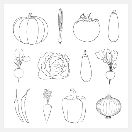 courgette: Set Linear Vegetable Icons ,Pumpkin,Green Onion,Tomatoes, Zucchini  Courgette ,Radish, Cabbage,Eggplant, Beet, Hot Chili Pepper,  Carrots, Onion,Sweet Pepper,Isolated Vector Illustration