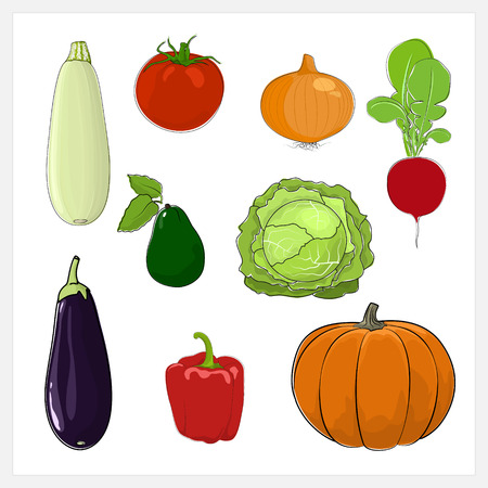 courgette: Set of Vegetable  Isolated on White Background, Edible Fruit, Eggplant, Sweet Pepper, Pumpkin, Radish,Cabbage , Tomatoes ,Zucchini  Courgette , Onion, Avocado, Vector Illustration