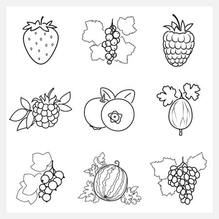 ripened: Set of Fruit Linear Icons ,Icons Strawberry,Blackcurrant,Raspberries, Blackberry , Blueberries,Gooseberry , Redcurrant,Watermelon,Grapes, Isolated on White Background , Vector Illustration Illustration