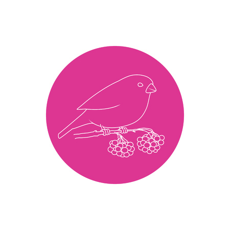 bullfinch: Linear  Icon  Christmas  Bullfinch,  Colorful Round Icons Bullfinch,  Bullfinch Sitting on a Branch with Bunches of Rowan, Icon of  Christmas Decorations, Icon in  Linear Style , Vector Illustration Illustration