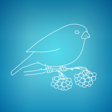 bullfinch: Christmas Bullfinch on a Blue Background, Bullfinch Sitting on a Branch with Bunches of Rowan, Christmas Decorations, Drawing in Linear Style , Vector Illustration