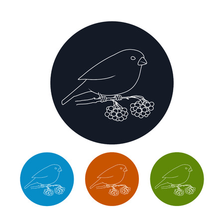 bullfinch: Icon of a Bullfinch,  Four Types of Colorful Round Icons Bullfinch,  Bullfinch Sitting on a Branch with Bunches of Rowan, Christmas Decorations, Icon in Linear Style , Vector Illustration