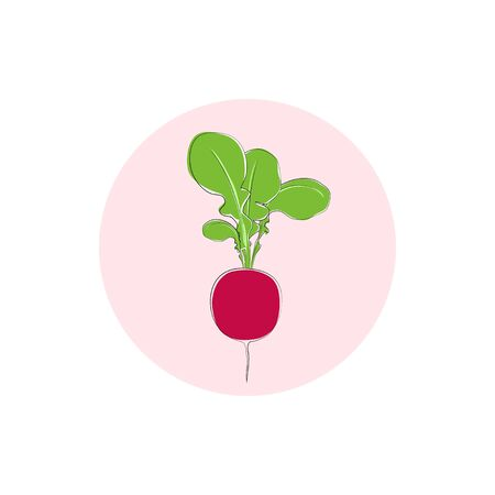 tuber: Icon radish, radish with leaves, icon vegetable with tops of vegetable