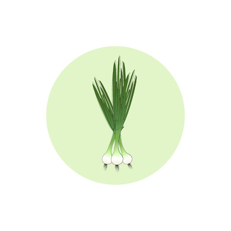 tuber: Icon green onion ,  icon vegetables