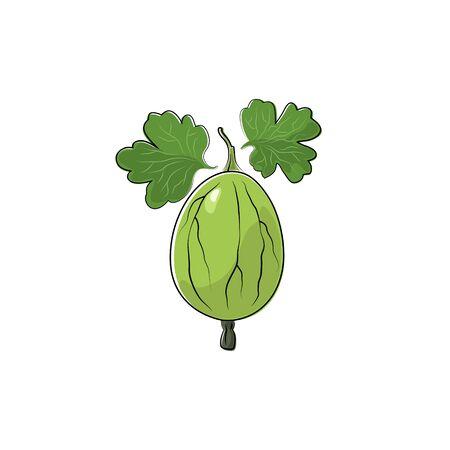 grosella: Verde de la baya de la grosella espinosa aislado en blanco, fruta de la grosella espinosa, ilustración vectorial