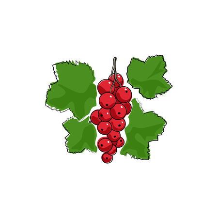 redcurrant: Berry Redcurrant Isolated on White Background, Fruit Redcurrant, Vector Illustration Illustration