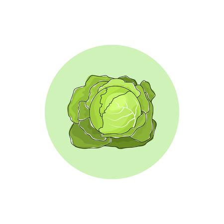 kale: Icon white cabbage , icon vegetable, garden plants Stock Photo