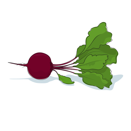 beet root: Beetroot, Beet Root Vegetable on White Background, Vector Illustration