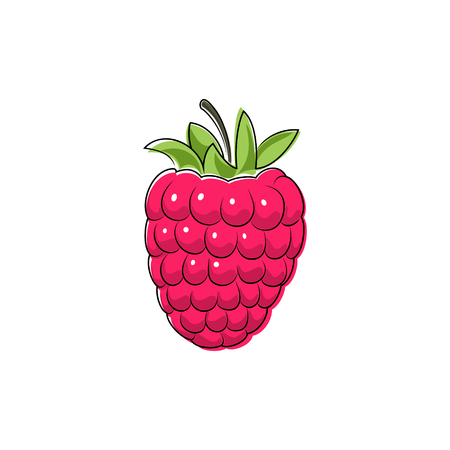 raspberry pink: Pink Berry Raspberries Isolated on White, Fruit Raspberries, Vector Illustration Illustration