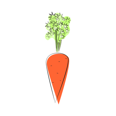 root vegetables: Carrot with Tops of Vegetable, Root Vegetables Standing Isolated on White Background, Vector Illustration Illustration