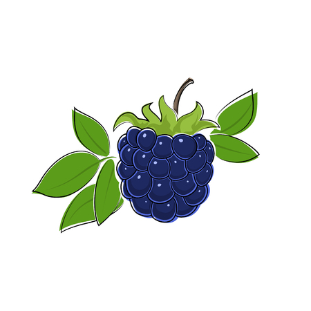 dewberry: Berry Blackberry Isolated on White, Fruit Dewberry, Vector Illustration