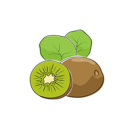 ripened: Kiwifruit Isolated on White, Tropical Fruit Kiwi, Vector Illustration