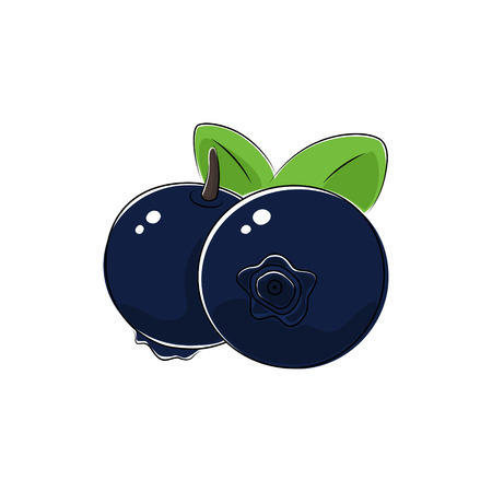 black berry: Black Berry Blueberries Isolated on White, Fruit Blueberries , Vector Illustration