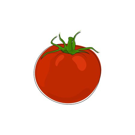 plant stand: Vegetable Tomato Isolated on White Background, Red Tomato Standing