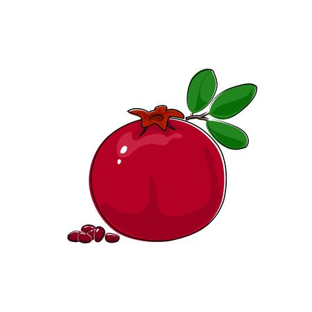 ripened: Pomegranate Isolated on White, Tropical Fruit Pomegranate, Vector Illustration