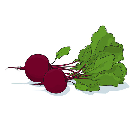 beet root: Beetroot, Two Different Beet Root Vegetable on White Background, Vector Illustration