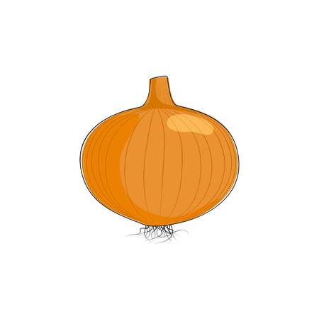 husks: Onion Isolated on White Background, One Whole Onion Standing , Vector Illustration