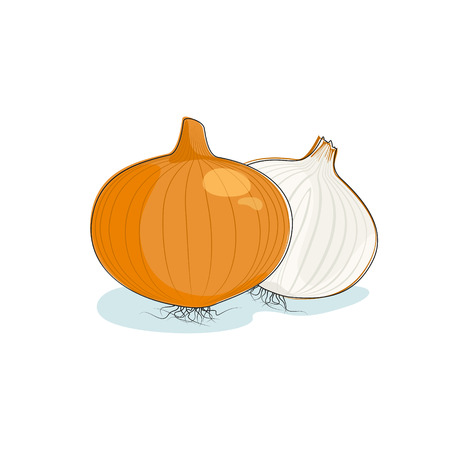 Onion Isolated on White, One Whole Onion and Sliced Onion , Vector Illustration