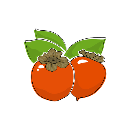 Orange Persimmon Isolated on White, Tropical Fruit Persimmon, Vector Illustration Illustration
