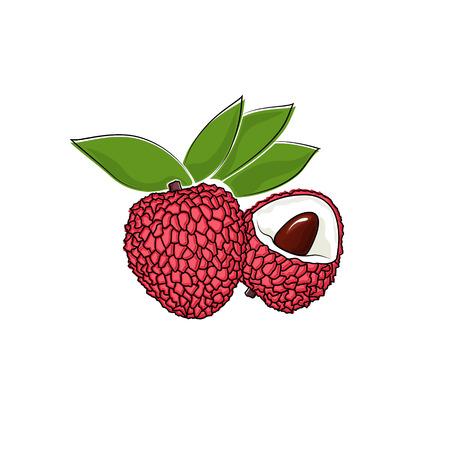 lichi: Lichee Isolated on White, Tropical Fruit Lichi, Vector Illustration