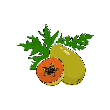 Papaya Isolated on White Background, Tropical Fruit Pawpaw, Vector Illustration Illustration