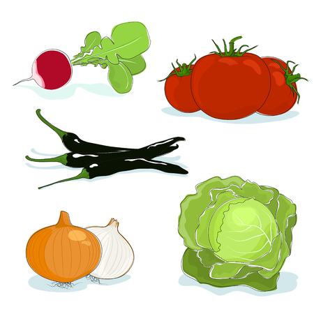 capsaicin: Fresh Gardening Vegetables Isolated on a White Background, a Radish and Red Tomatoes, Hot Pasilla Chile Pepper and Onions, White Cabbage, Vector Illustration Illustration