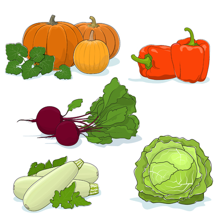 Fresh Gardening Vegetables Isolated on a White Background, Orange Bell Peppers and Pumpkin, Zucchini Courgette and White Cabbage, Beetroot, Vector Illustration