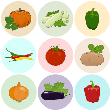 capsaicin: Round Colored Icons Vegetables, Tomato, Onion and Potato, Green and Red Sweet Pepper, Icons Zucchini Courgette and Hot Pasilla Chile Pepper, Pumpkin with White Cabbage, Eggplant, Vector Illustration