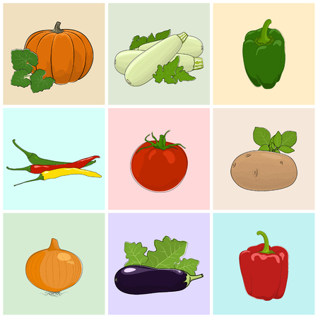 capsaicin: Colored Icons Vegetables, Eggplant,Zucchini Courgette and Potato, Green and Red Sweet Pepper, Icons Onion and Hot Pasilla Chile Pepper, Pumpkin with White Cabbage, Tomato , Vector Illustration