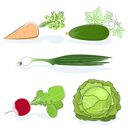 Fresh Gardening Vegetables Isolated Vector Illustration set
