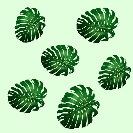 Seamless pattern of beautiful big green leaves Monstera plant, Monstera on green background, vector illustration  イラスト・ベクター素材
