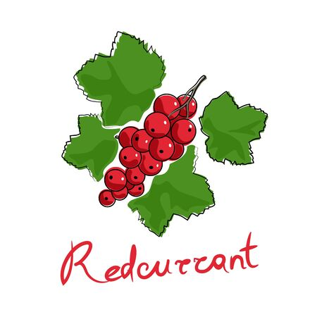 Sweet berry Redcurrant and text Redcurrant , fruit isolated on white background, vector illustration