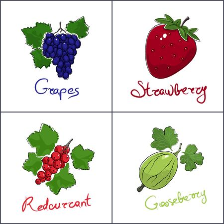 Set of fruits isolated on white background with the name of the fruit , sweet berries grapes and strawberry, redcurrant and gooseberry, vector illustration