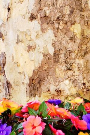 Textuur van de schors van een boom en bloemen hieronder maakte een prachtige frame met een spatie te gebruiken