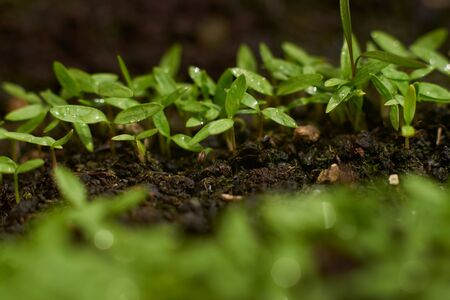 Home gardening at the backyard, pot, herb on the clean background of topsoil,