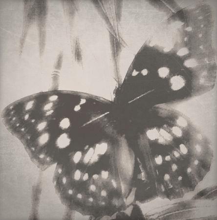 나비 궁금 스톡 콘텐츠